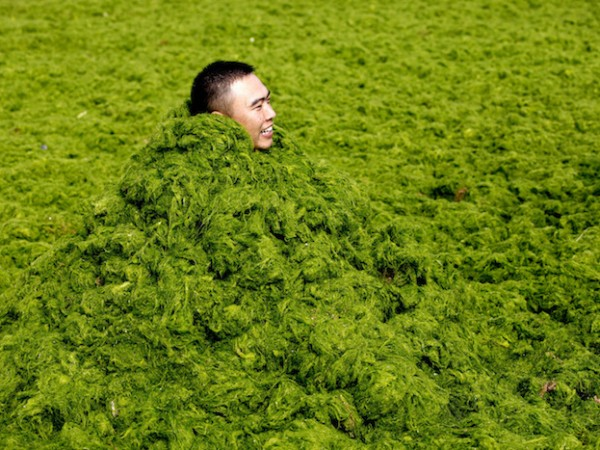 A man covers himself in algae as he plays with his friends at a seaside in Qingdao